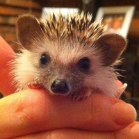 Baby Hedgehog - Hazel's hedgehogs - kids at home - suppliers and services - just kids - my sheen village